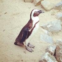Das Foto wurde bei Tierpark EuregioZoo von Thomas W. am 10/28/2011 aufgenommen