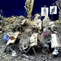 Photo taken at Latvijas dabas muzejs | Latvian Museum Of Natural History by Anda P. on 3/24/2012