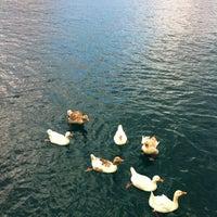 5/19/2012 tarihinde Okan Ö.ziyaretçi tarafından Akvaryum Koyu'de çekilen fotoğraf