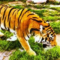 Das Foto wurde bei Зоопарк «Лимпопо» von Лена Д. am 7/21/2012 aufgenommen