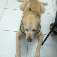 11/16/2011にFernando R.がProvet Analia Francoで撮った写真