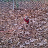Photo taken at Monroe Place Dog Park by Jake E. on 12/13/2011