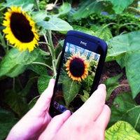 Das Foto wurde bei Sunflower Garden von XaviGasso am 8/28/2012 aufgenommen