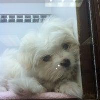 Teacups Puppies & Boutique - University Heights - Davie, FL