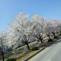 Photo taken at 조각공원벚꽃길 by yoon seo on 4/14/2012