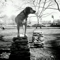 Photo taken at McCarren Dog Park by Ned R. on 2/3/2012