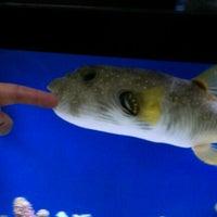 Photo taken at ABC Aquarium by Debra V. on 1/28/2012