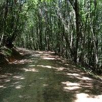 7/15/2012 tarihinde Gül H. D.ziyaretçi tarafından Polonezköy Tabiat Parkı'de çekilen fotoğraf