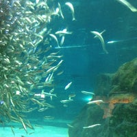 Photo taken at COEX Aquarium by Ahyoung K. on 8/5/2012