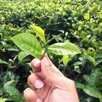 Photo taken at Glenloch Tea Factory by عبدالرحمن الطيّار on 7/4/2012