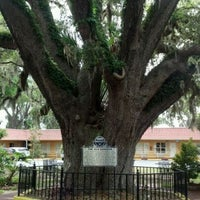 Photo taken at The Old Senator Tree by Brian G. on 4/23/2012
