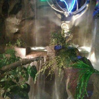 Photo taken at Rainforest Cafe by Connie A. on 1/14/2012