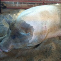 Photo taken at Swine Barn by Larry R. on 8/11/2011