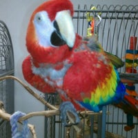 Photo taken at MAARS Parrot Rescue by Mike M. on 1/10/2012