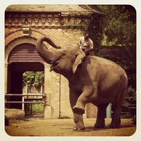Photo taken at Audubon Zoo by Jimmy T. on 3/28/2012
