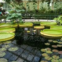 6/20/2012 tarihinde Lora K.ziyaretçi tarafından Royal Botanic Gardens'de çekilen fotoğraf