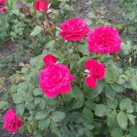 Photo taken at Sinisippi Rose Garden by Christine H. on 8/12/2012