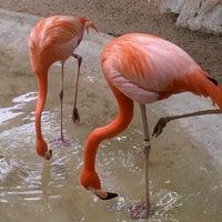 Photo taken at San Antonio Zoo by Caitlin P. on 5/11/2011