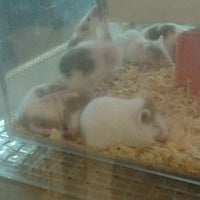 Photo taken at Megalong Pet Store by Dexie L. on 10/22/2011