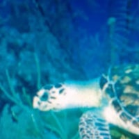 Photo taken at Arrecife Mesoamericano by Reef M. on 4/20/2012