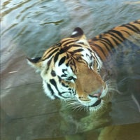 Photo taken at LSU - Mike's Habitat by Oliver S. on 6/11/2012