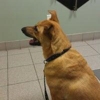 Photo taken at Stoney Creek Animal Hospital by Lillia C. on 7/13/2012