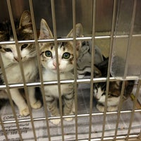 Photo taken at Young Williams Animal Shelter by Delaney Ruth M. on 8/23/2012
