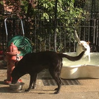 Photo taken at Tompkins Square Park Dog Run by Talia F. on 5/1/2012