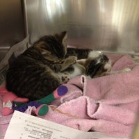 Photo taken at Northeast Animal Shelter by Christine on 7/11/2012