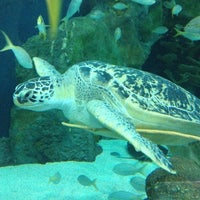 Photo taken at Ripley's Aquarium by Roberta on 7/31/2012