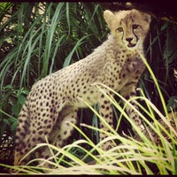 Photo taken at Smithsonian National Zoological Park by angela n. on 7/30/2012