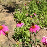 Photo taken at Lady Bird Johnson Wildflower Center by Aaron B. on 4/22/2012