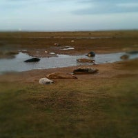 Photo taken at Donna Nook Beach by Chris S. on 11/26/2011