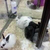 Photo taken at Pet Supermarket by lori h. on 4/26/2012