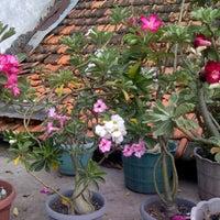 Photo taken at My Flower Garden by moel m. on 12/25/2011