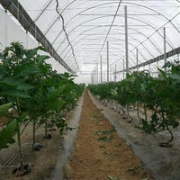 Photo taken at Riverford Organic Vegetables by Boldizsár H. on 5/18/2012