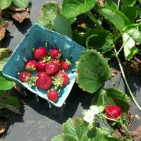 Photo taken at High Rock Strawberries by Matt M. on 5/25/2012