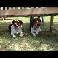 Photo taken at White Rock Lake Dog Park by Andy V. on 9/9/2012