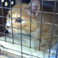 Photo taken at Four Paws Animal Hospital by Kelly R. on 8/6/2012