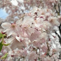 Photo taken at 蓮華寺 by Hiroshi S. on 4/19/2012
