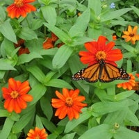 Photo taken at Norfolk Botanical Garden by Amy L. on 9/1/2012