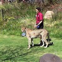 6/7/2012 tarihinde JediLarry B.ziyaretçi tarafından Cheetah Run'de çekilen fotoğraf