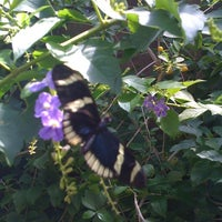 Photo taken at Butterfly Pavilion by Priscilla B. on 8/9/2011
