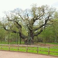 Снимок сделан в Sherwood Forest National Nature Reserve пользователем Walter T. 5/13/2012