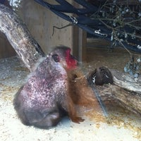 Photo taken at Monkey World - Ape Rescue Centre by Elizabeth G. on 7/9/2011