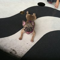 Photo taken at East River Esplanade South Dog Run by Janet C. on 7/16/2011