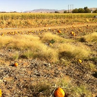 Photo taken at Frazier's U-Pick Pumpkin Patch by Todd on 10/23/2011