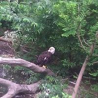 6/1/2012にAnthony R.がQueens Zoo Aviaryで撮った写真