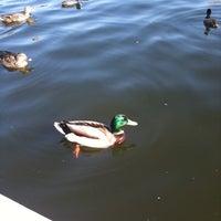 Photo taken at Lake Balboa Park by Mindie on 1/29/2011