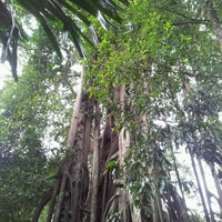 Photo taken at The Rain Forest by Bastiaan K. on 1/14/2012